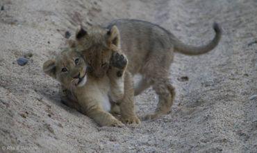 Safari di Lusso - Kruger area