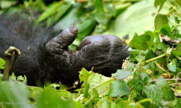 Lo Sguardo del Gorilla - Partenza a data fissa 7 Febbraio 2020 - 2 Partecipanti confermati