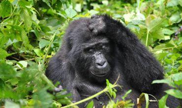 Trekking dei gorilla - 4 giorni e 3 notti con trasferimento via strada