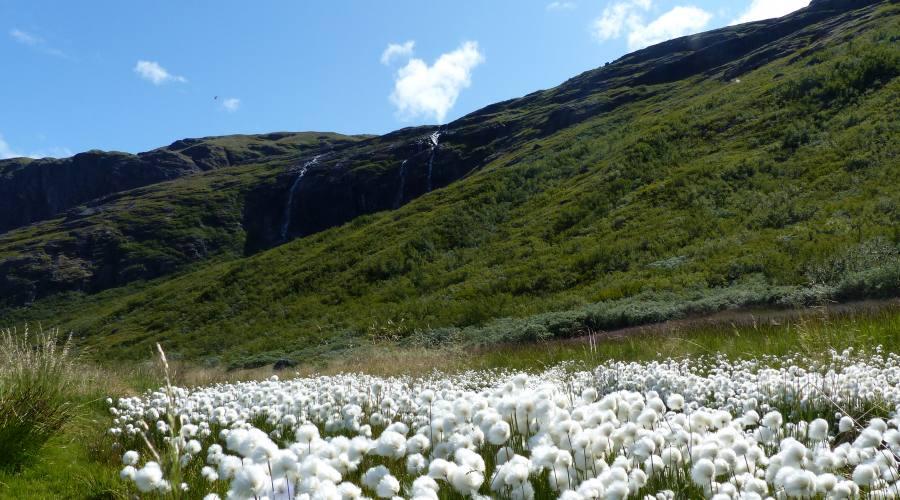 La valle dei fiori