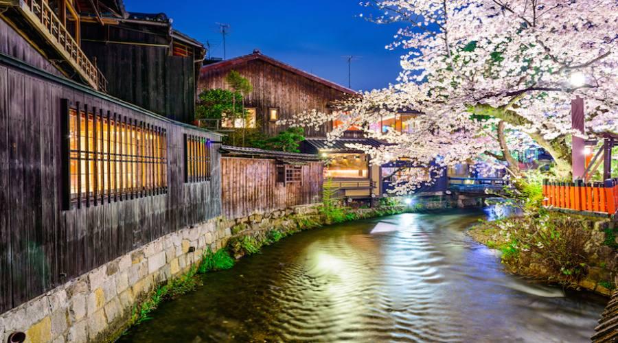 Kyoto  Fioritura dei ciliegi