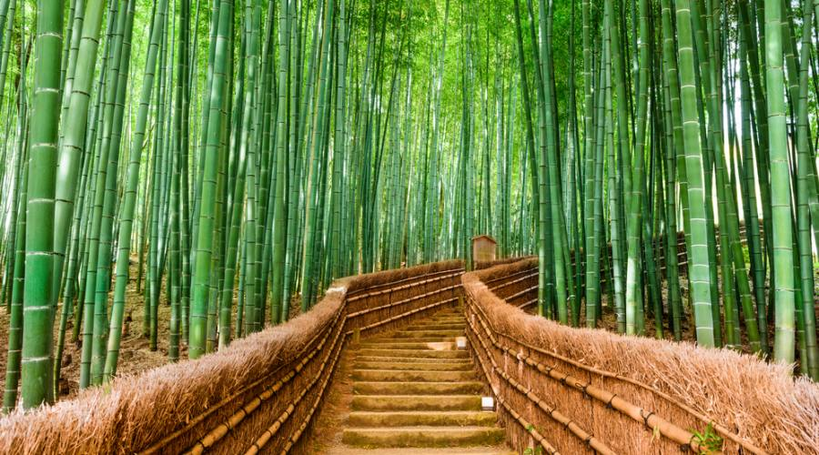 La foresta di bambu' di Arashiyama, raggiungibile da Kyoto