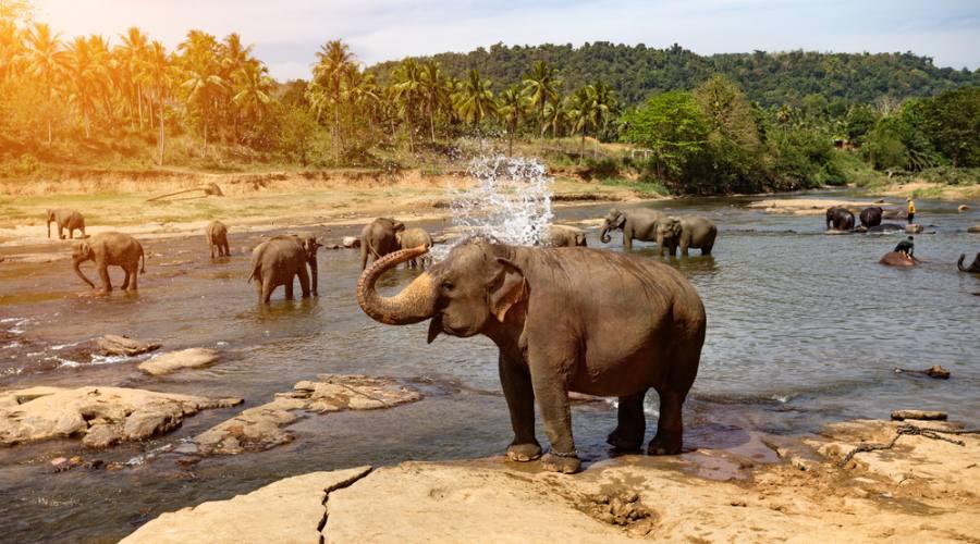 """Elephant Orphanage"" di Pinnawela"