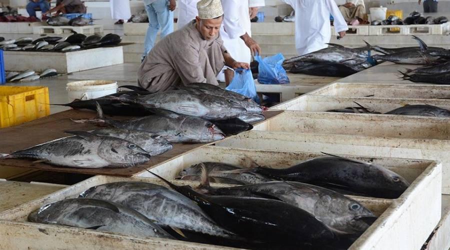 Souq a Muscat-il mercato del pesce