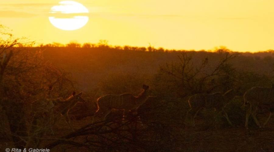 Alba nella savana