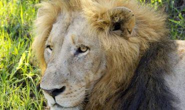 A tutto Safari nella Nazione Arcobaleno e Cape Town