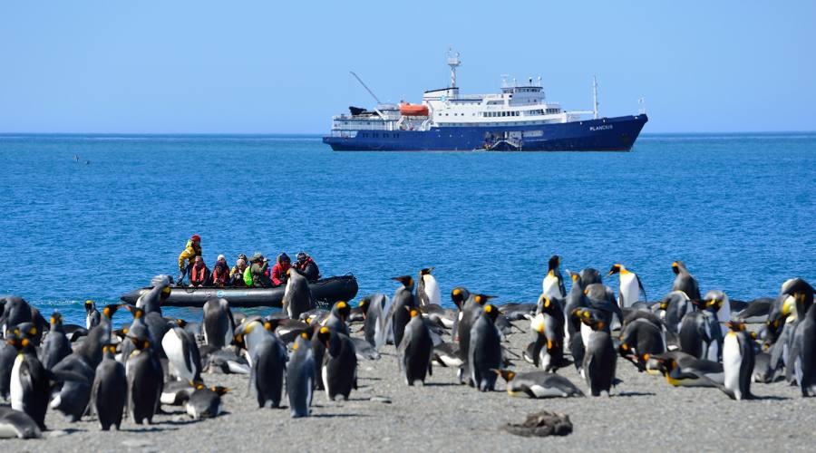 Gruppo di pinguini