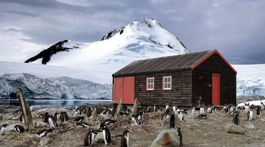 Pinguini a Port Lockroy