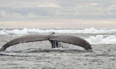 Sulla rotta dei grandi esploratori polari