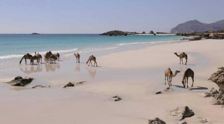 Spiaggia di Salalah