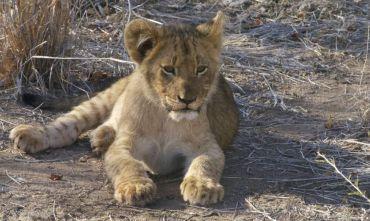 A tutto Safari nella Nazione Arcobaleno