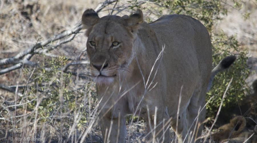 Leonessa Kruger