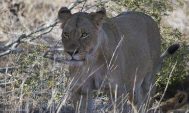Il meglio del Safari e Città del Capo