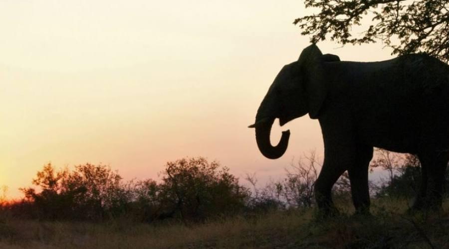 Elefante al trammonto