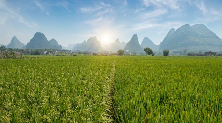 Cina Meridionale Piantagioni di Riso