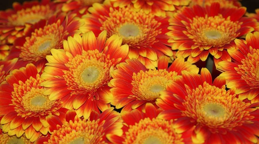 fiori Teheran