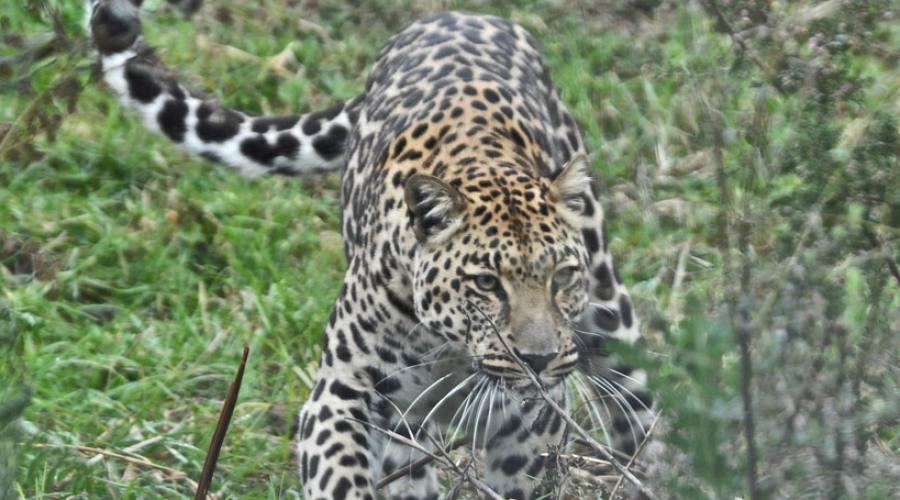 Il Kruger