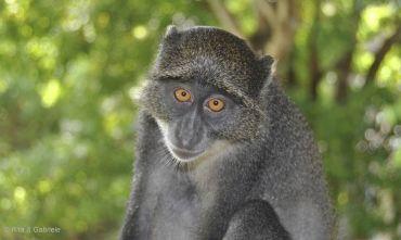 Lo Sguardo del Gorilla - Costruisci il tuo viaggio con le estensioni che preferisci!!! 2020