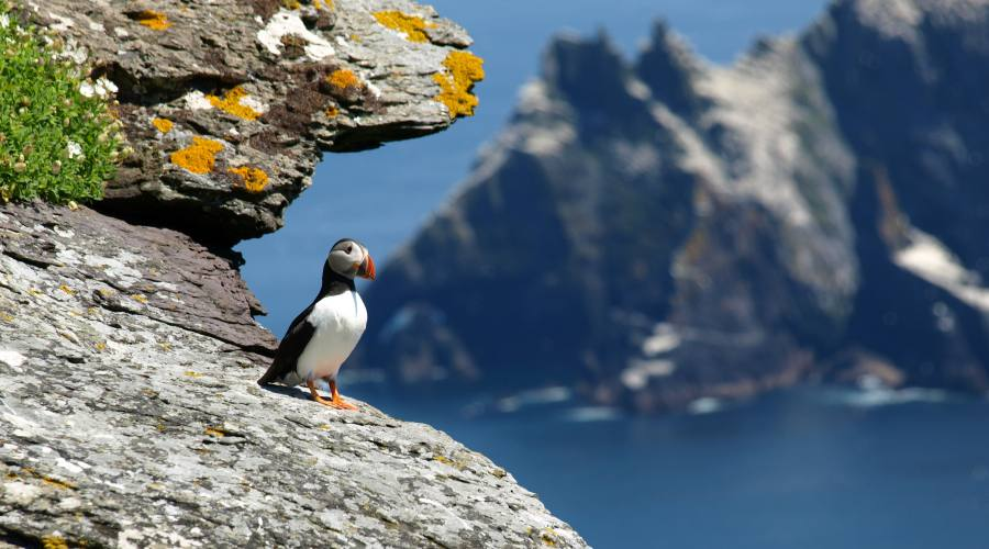 Puffin alle isole Skellig