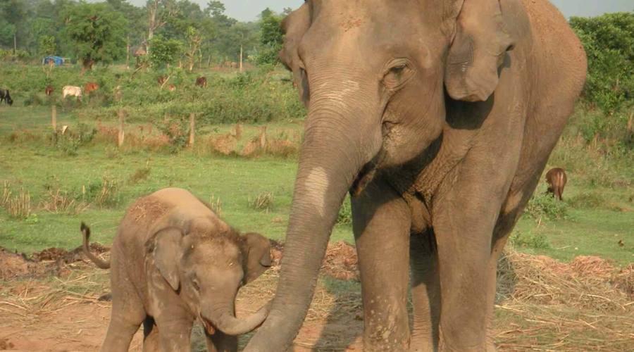 Gli elefanti nel Parco Chitwan