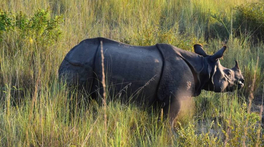 Safari nel Parco Chitwan