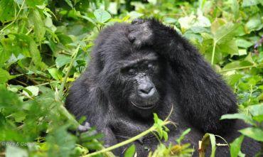 Lo Sguardo del Gorilla - Partenza confermata del 18 Ottobre 2019