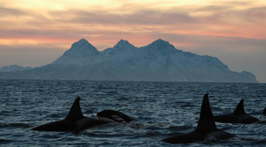 Orche alle Isole Vesteralen