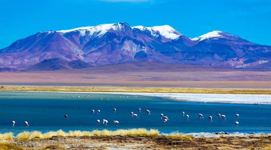 Patagonia - Lago con Fenicotteri di El Calafate