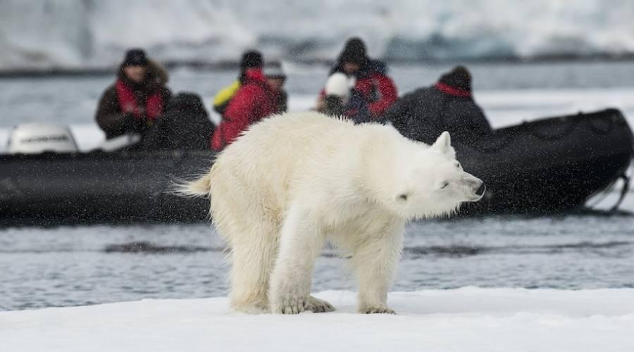 Avvistamento orso polare