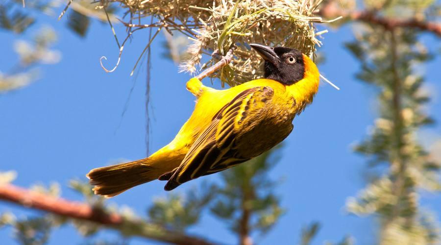 Bird in Selous Game Park