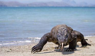 Viaggio con l'esperto: I Draghi di Komodo, in veliero tra le Isole della Sonda