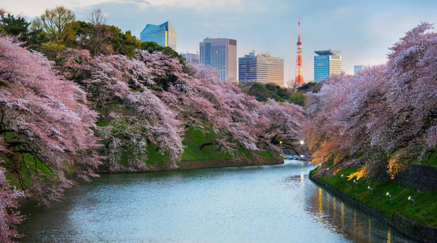 Tokyo Giardino Kitanomaru