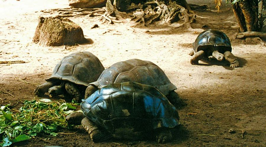 Seychelles le tartarughe giganti