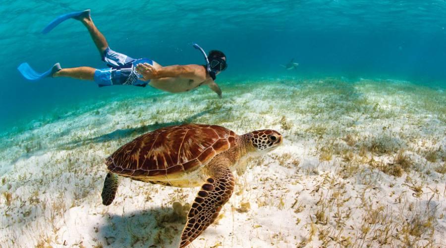 Seychelles Tartaruga marina