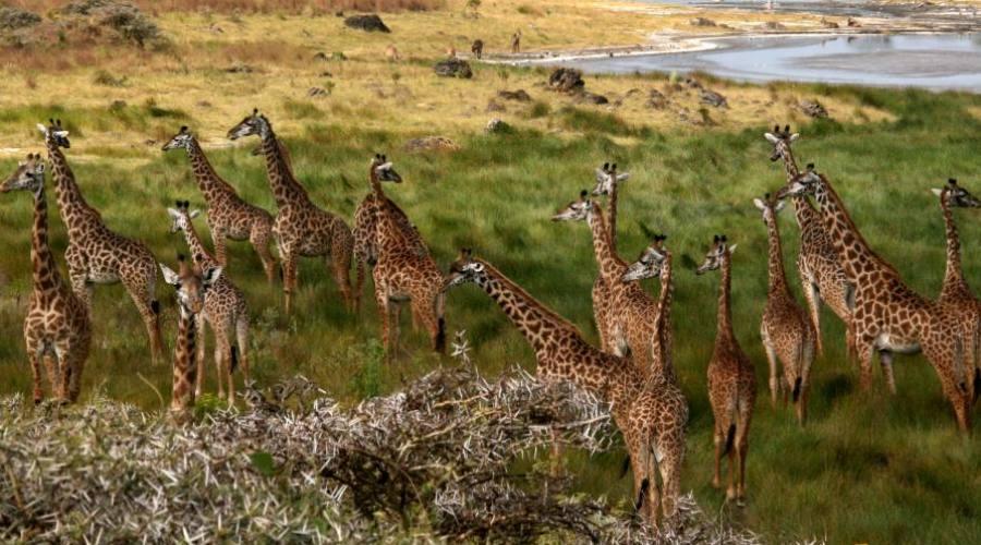 Parque Nacional del Serengeti