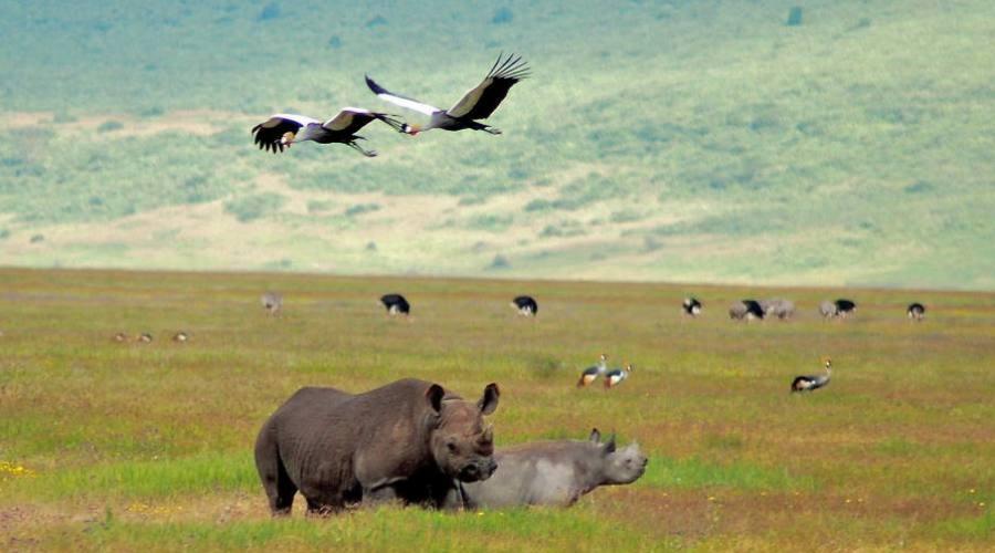 Área de conservación de Ngorongoro