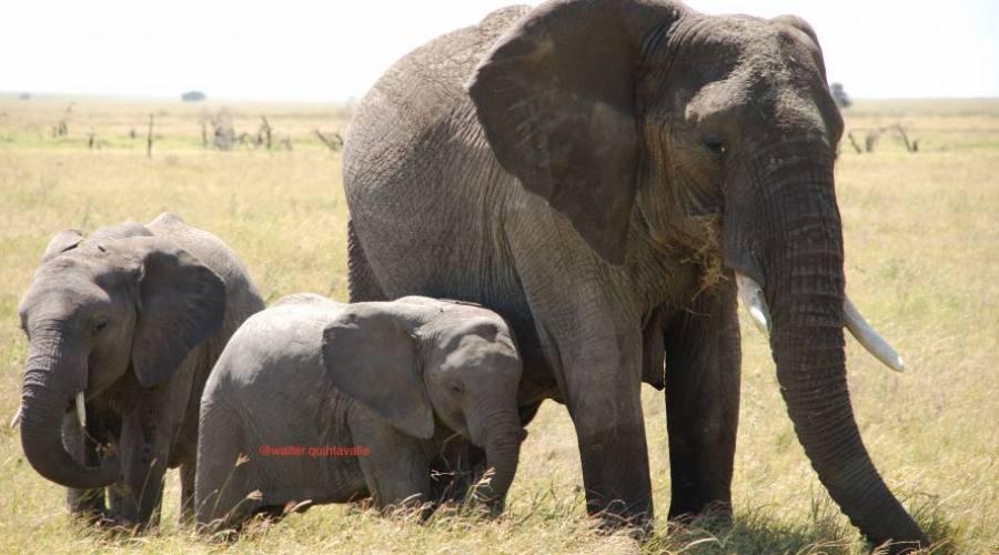 Elefantessa con cachorro