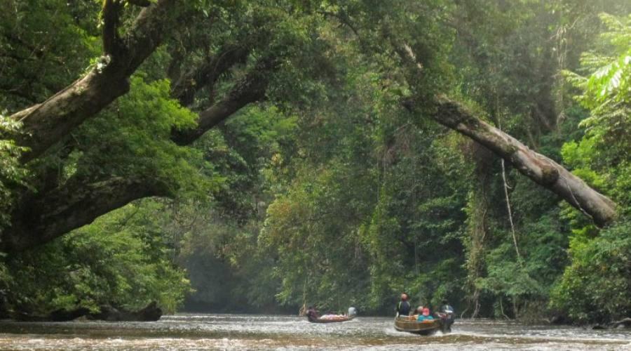 sul fiume nella giungla