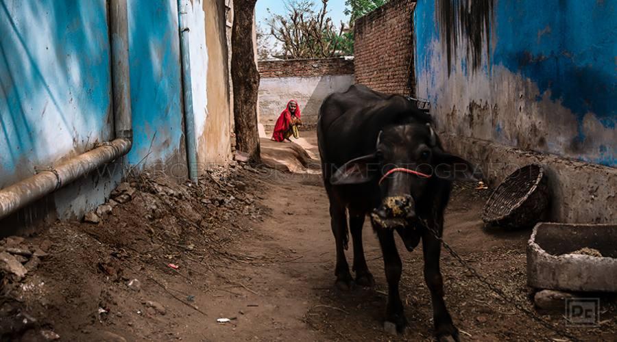 Mandawa-Rajasthan
