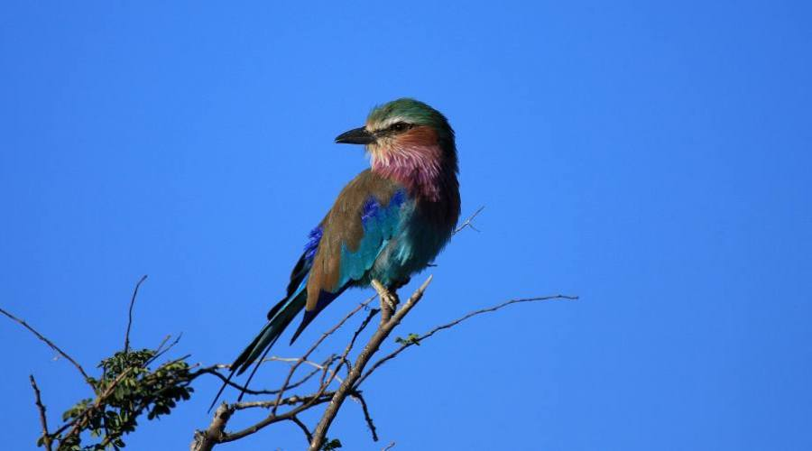 Jay en el parque Kruger