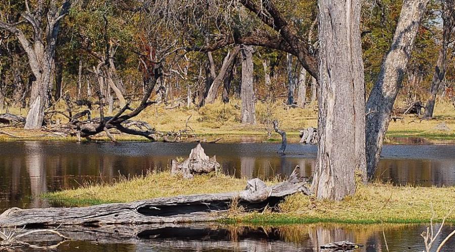paisaje en el parque Kruger