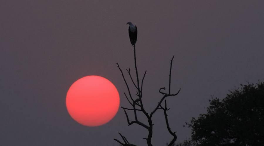 puesta de sol en el Kruger