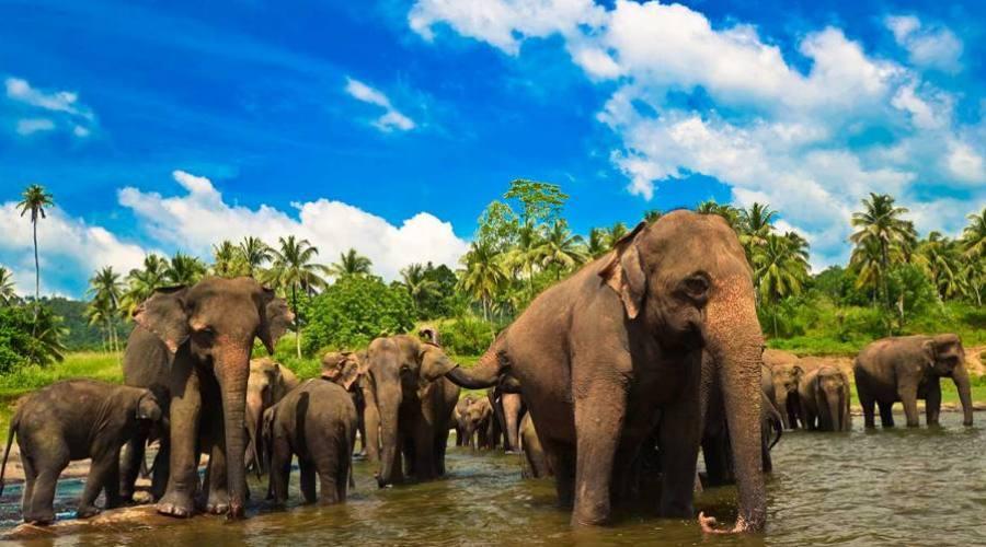 Polonnaruwa: orfanato de elefantes