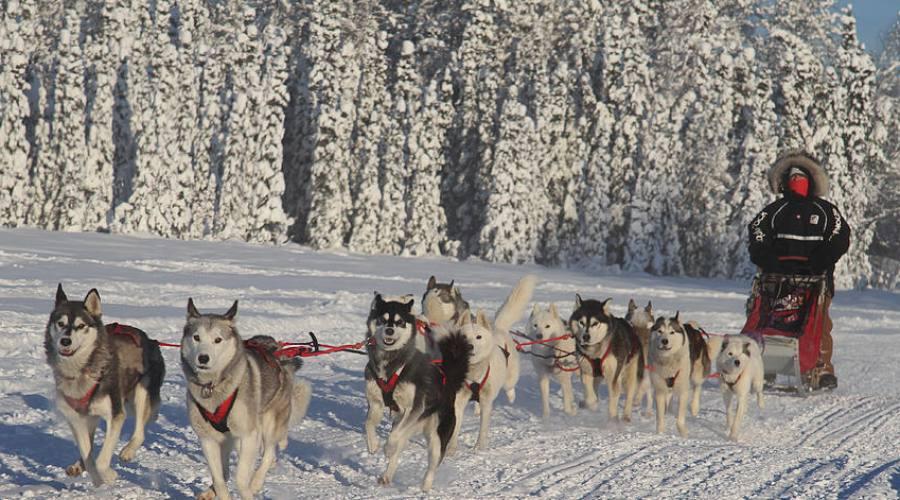 sdledge dogs