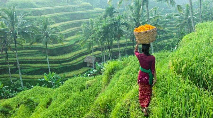 piantagione tropicale