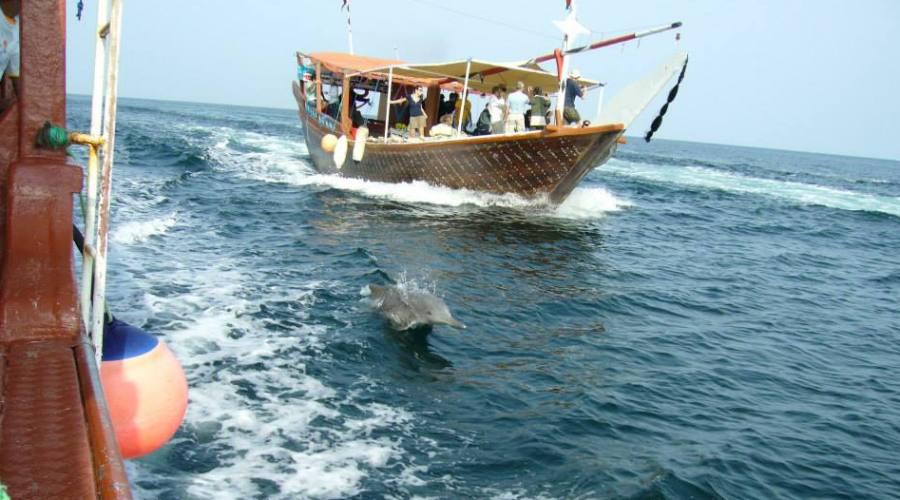 dhow e delfini