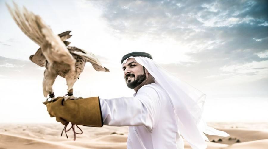 La falconeria ed il deserto