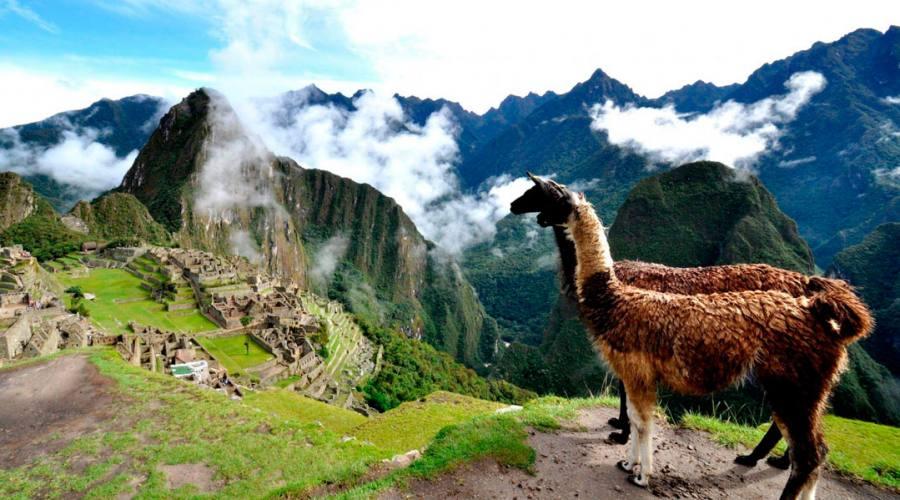 Lama sul Macchu Picchu