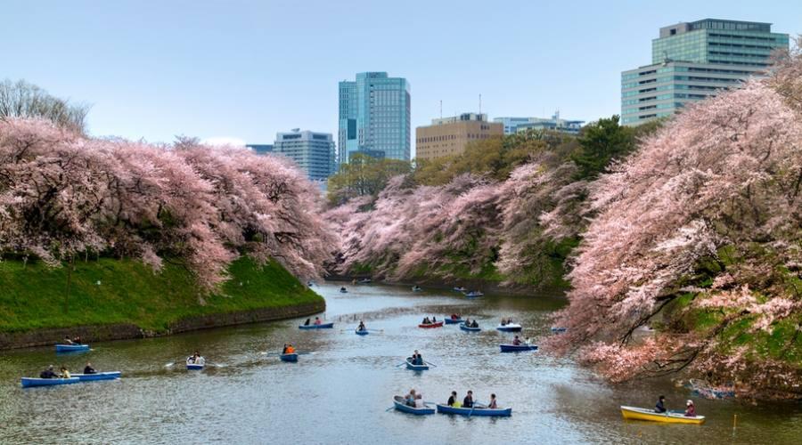 Uno dei parchi di Tokyo in Primavera