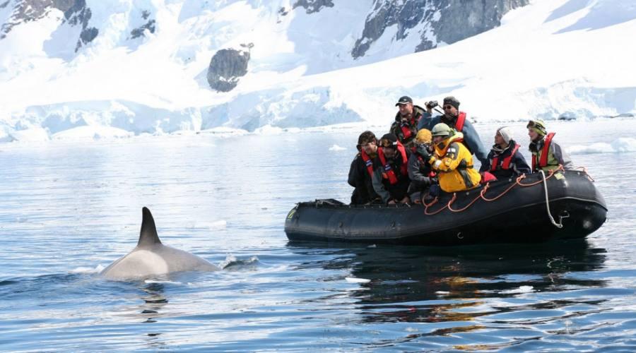 avvistamento di  un delfino